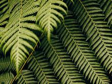 Detail Shot Of Ferns In Scotland