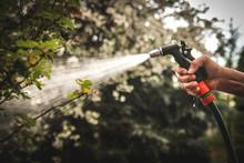 Watering Garden Equipment - Hand Holds The Sprinkler Gun For Irrigation Plants. Gardener Hand With Watering Hose.