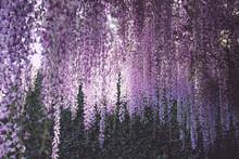 Full Frame Shot Of Purple Flow...