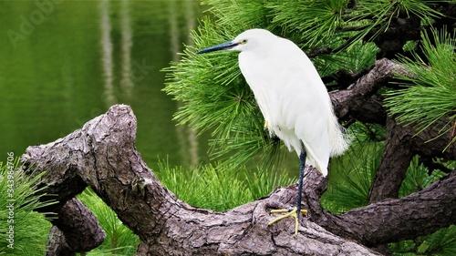 Photo Pájaro blanco grande con pico largo apoyado en una rama del árbol delante de un lago