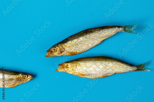 Two smoked fish with their mouths open in front of one fish on a blue background Canvas Print