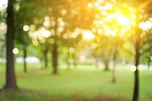 Blur Nature Bokeh Green Park B...