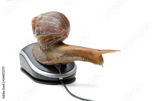 Photo Garden snail next to computer mouse, slow internet, slow processor, isolated on