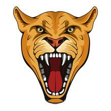 Puma, Lynx, Lioness. Panther W...