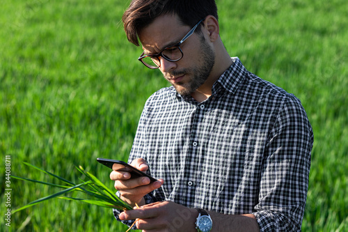 Fototapeta Portrait of farmer standing in young wheat field examining and photographing crop with smartphone. obraz
