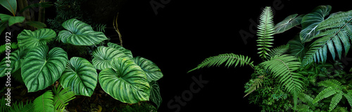 Tropical rainforest foliage plants bushes (ferns, palm, philodendrons and tropic plants leaves) in tropical garden on black background, green variegated leaves pattern nature frame forest background Fotobehang