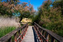 Wooden Footbridge Amidst Tree