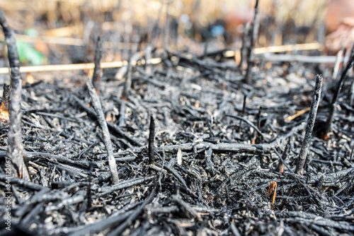 Burned forest, burned grass, careless handling of fire, forest arson Canvas Print