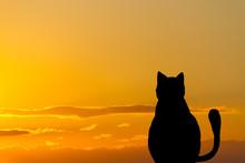 Funny Cat Traveler Character