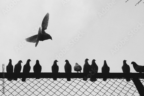 Low Angle View Of Birds Perching On Railing Canvas Print