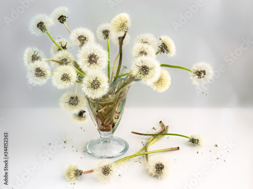 bouquet of white airy dandelions in a glass vase Canvas Print