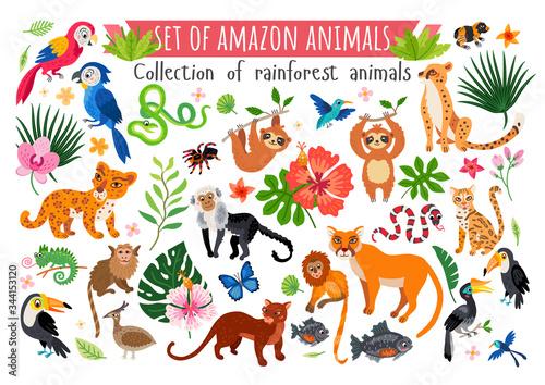 Fotografija An Amazon rainforest jungle animals set. Vector