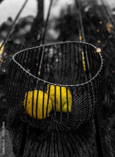 Photo Fruit, araignée, insecte, toile, nature, jaune, macro, animal, noir, arachnida,
