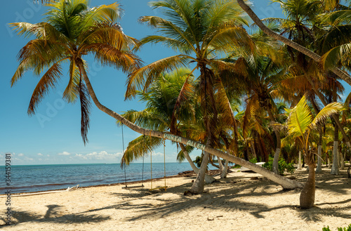 Photo Tropical palm tree with a swing and beautiful sandy beachy at Punta Allen near T