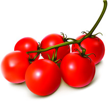 Cherry Tomatoes On A Vine Vector