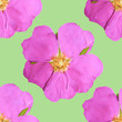 canvas print picture - Briar, wild rose. Illustration, texture of flowers. Seamless pattern for continuous replication. Floral background, photo collage for textile, cotton fabric. For use in wallpaper, covers.