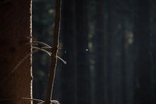 Dark Closeup To Spider Net.