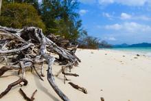 Old Dry Tree Roots On Beautifu...