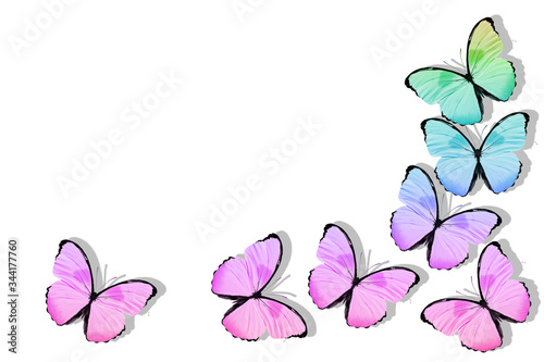 flying tropical butterflies. isolated on white Fototapet