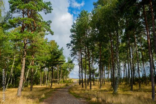 Fototapeta Road Amidst Trees Against Sky obraz na płótnie