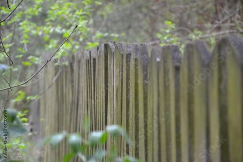 Obraz ogrodzenia, drewna, charakter, zieleń, drzew, gras, bory, drewniane, jardin, drzew, stary, brama, jary, lato, bambo, park, mur, drewna, obszarów wiejskich, naturalny, krajobraz, kołkować, außenaufnahm - fototapety do salonu