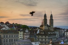 Blurred Motion Of Silhouette Bird Flying Over City During Sunset