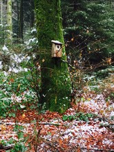 Birdhouse On Tree Trunk With Moss During Winter
