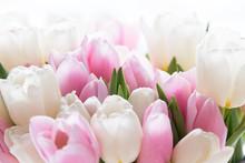 Beautiful Bouquet Tulips Light...