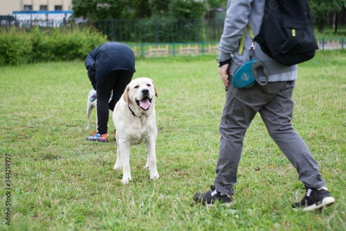 Papel de parede Man And Woman With Staffordshire Bull Terriers On Field