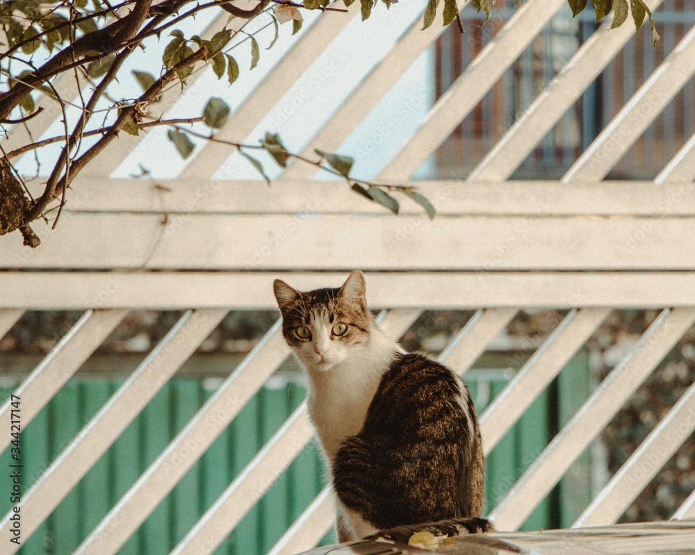 Fototapeta olhar felino