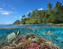 French Polynesia, Coral Reef W...