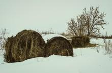 Straw Bales At Winter