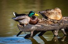 Birds And Animals In Wildlife ...