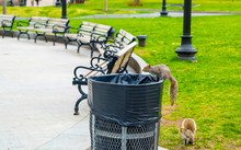 Squirrels At Boston Common Pub...