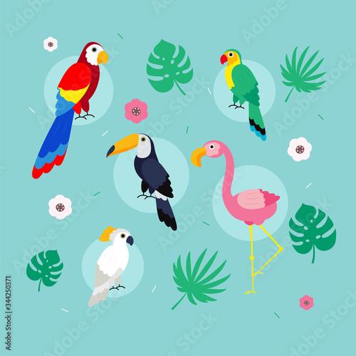 Photo Set of birds. Bright exotic tropical birds.