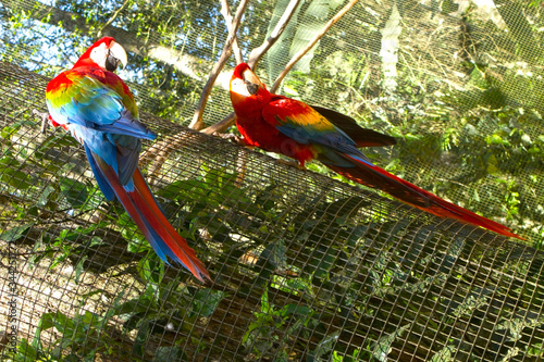 Pajaro, pareja, dos, guacamayo, azul, colorido, brasil, selva, parque de aves, ave, verde, arbol, naturalesa, exotico Canvas Print
