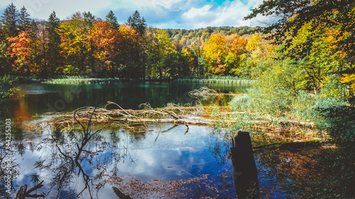 Scenic View Of Lake In Forest During Autumn Canvas Print