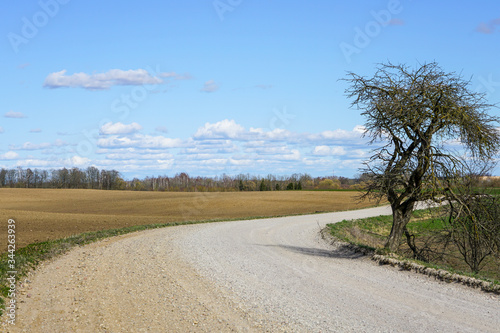 scenic rural gravel road with a bend and a tree on the roadside Canvas Print
