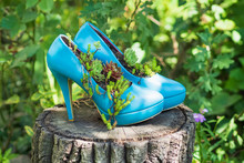 Blue Second Hand Shoes, Stilettos, High Heels / Upcycled Into Eco Friendly Planters / Flowerbeds / Flower Pots. Sustainable Gardening Idea For A Yard
