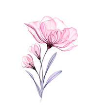 Watercolor Rose Bouquet. Hand ...