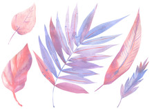 Palm Pink And Purple Leaves, L...