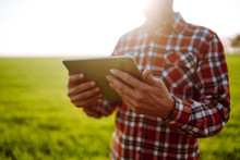 Farmer With A  Digital Tablet In His Hands, Checks The Condition Of Young Wheat In The Field. Copy  Space Of The Setting Sun Rays On Horizon In Rural Meadow.  Rich Harvest.