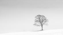 Single Tree On Hill Against Sky