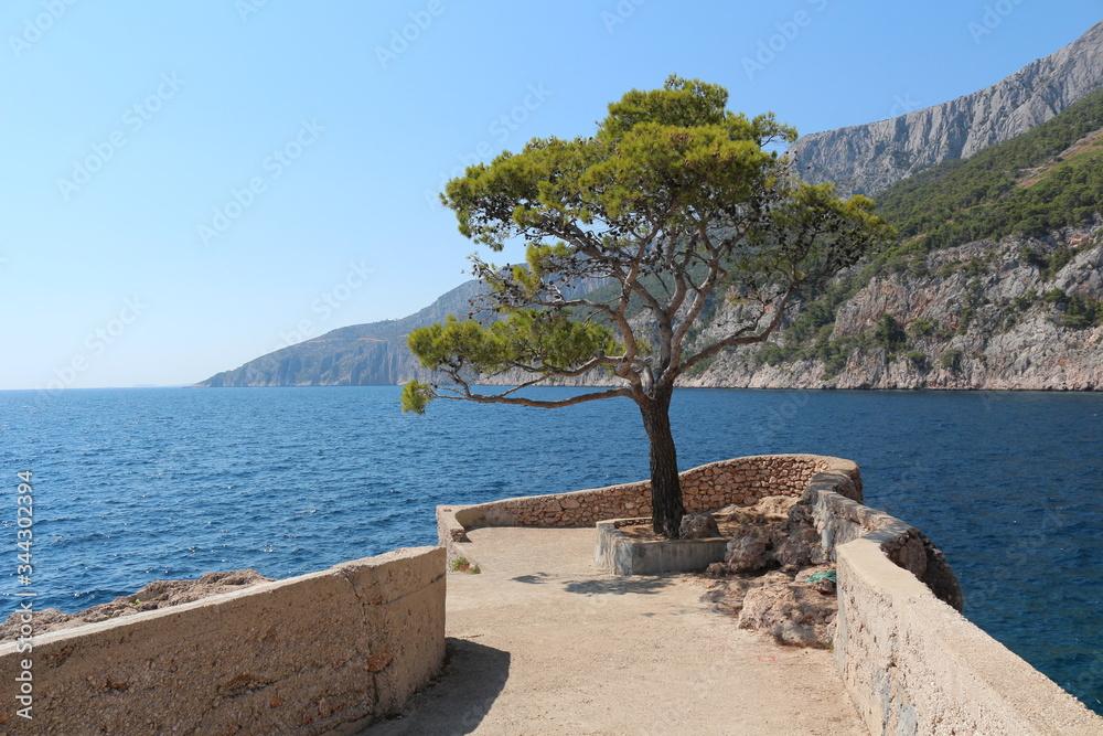 Fototapeta Sosna na wyspie Hwar  w Chorwacji - obraz na płótnie