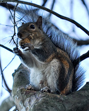 Low Angle View Of Squirrel Eating Nut