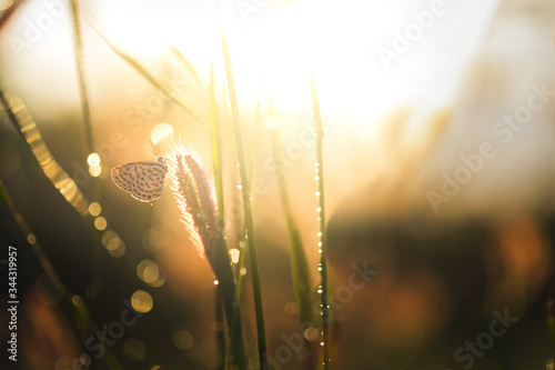 the rays of the sun in the green grass on which the butterfly sits Canvas Print