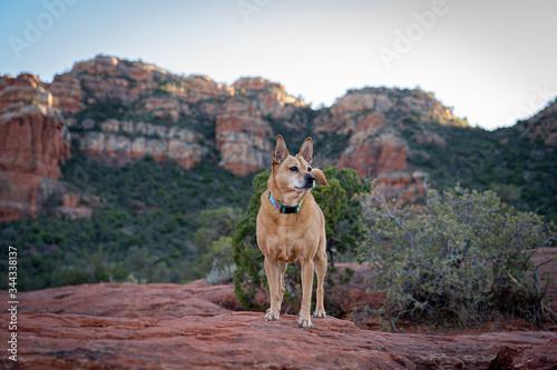 Fotografia Sedona Hiking Companion