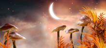 Magical Fantasy Mushrooms Vall...