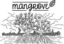 Mangrove Forest Background Vec...
