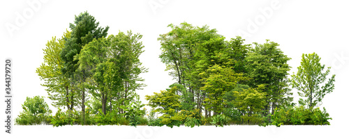 Photo Cutout tree line